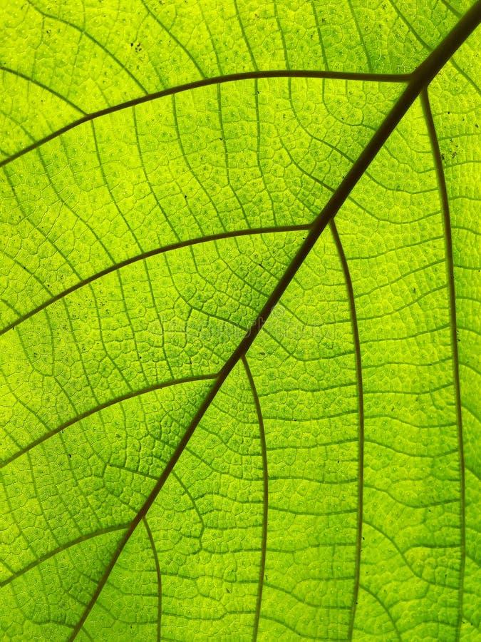 Macro van groen blad van boom wordt geschoten die royalty-vrije stock foto's