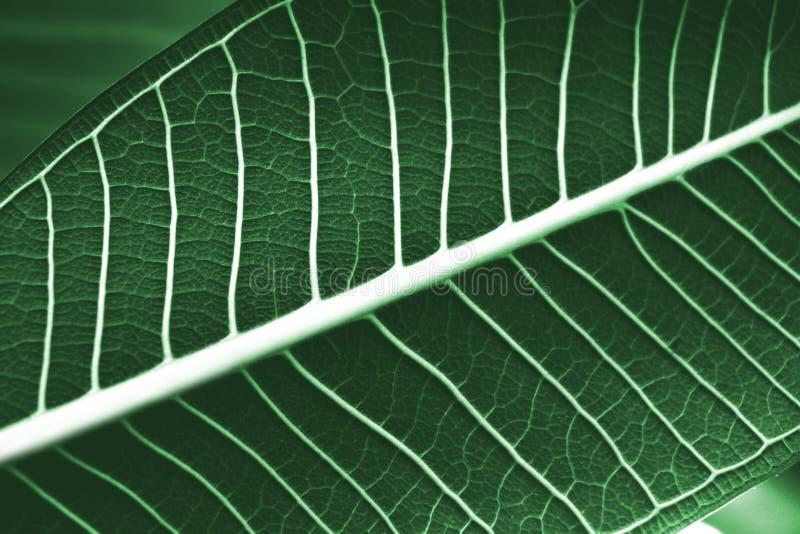 Macro van groen bladpatroon stock foto's