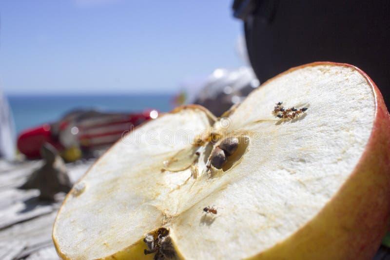 Macro van mieren die een appel eten stock foto