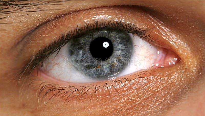 Macro van oog stock fotografie