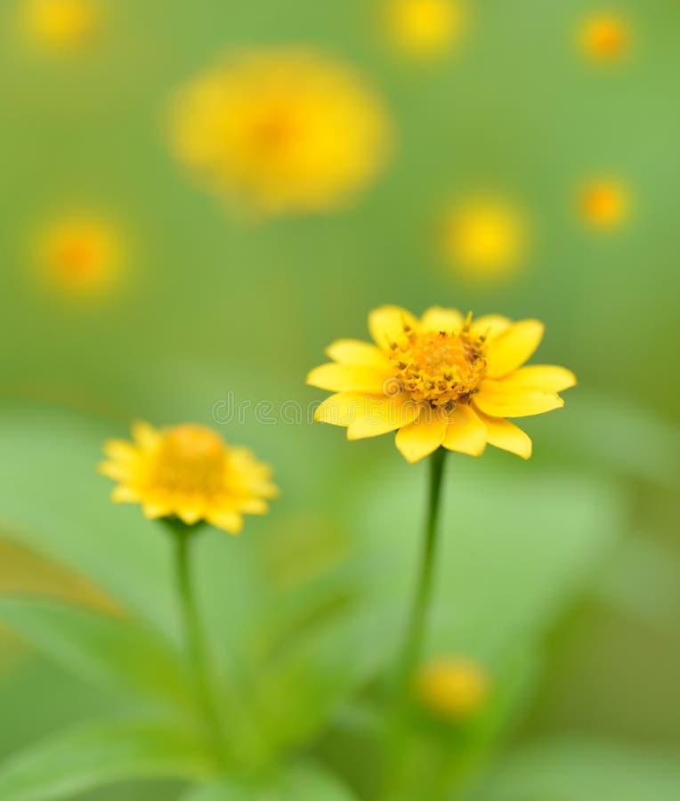 Macro van uiterst kleine gele wilde bloemen wordt geschoten die stock foto