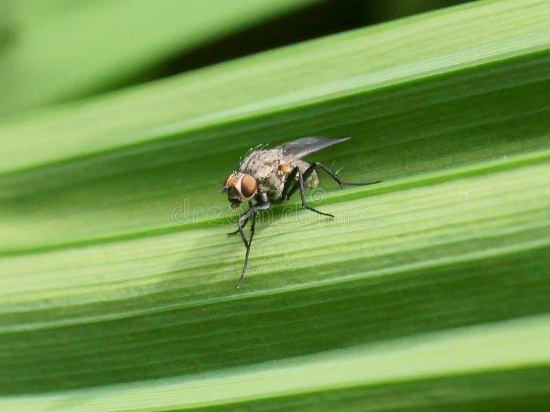 Macro van vlieg op een groen blad stock foto's