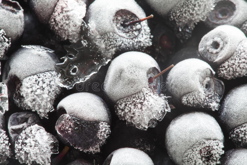 Macro view frozen Blueberries. Berries freezer. Frozen berries Closeup image. Ice and snowflakes Abstract stock photography