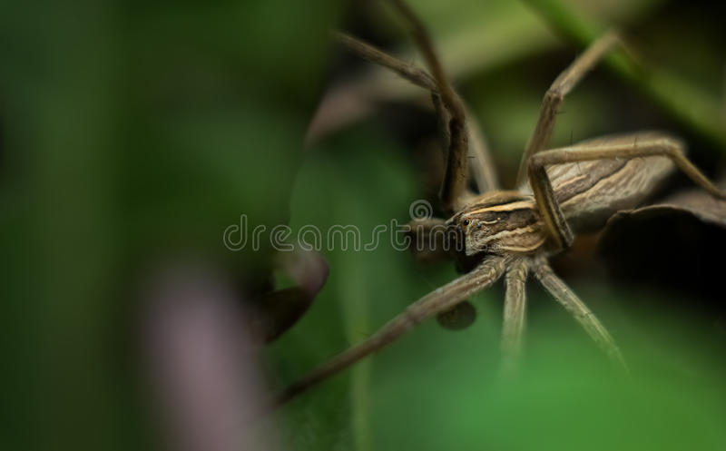 Macro view of gray garden spider. Macro view of beautiful gray garden spider royalty free stock images