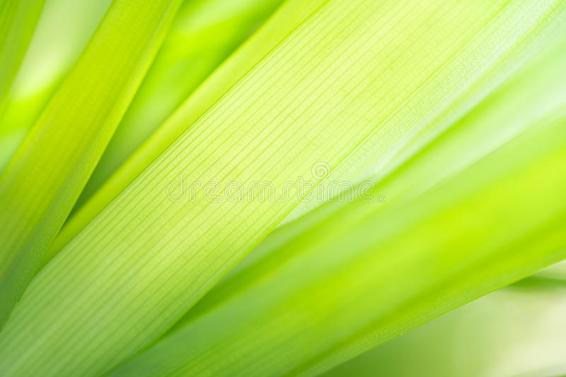 Macro photography of green leaf texture background. Macro photography of green leaf texture on blurred greenery background in garden with copy space using as royalty free stock photo