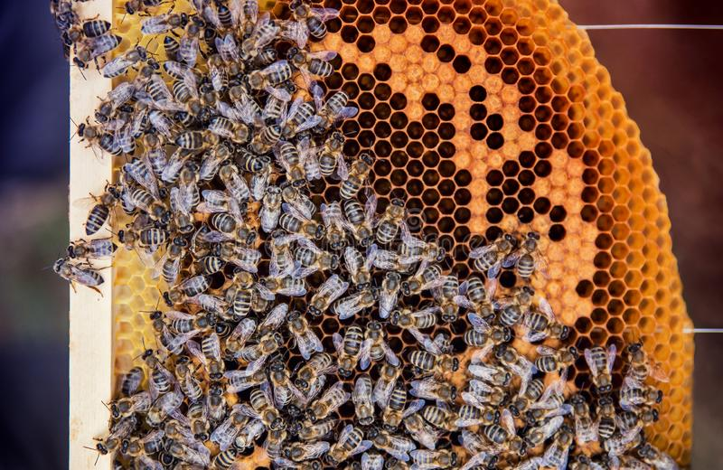 Macro view of many bees on the honecomb. Beekeeping concept. stock image