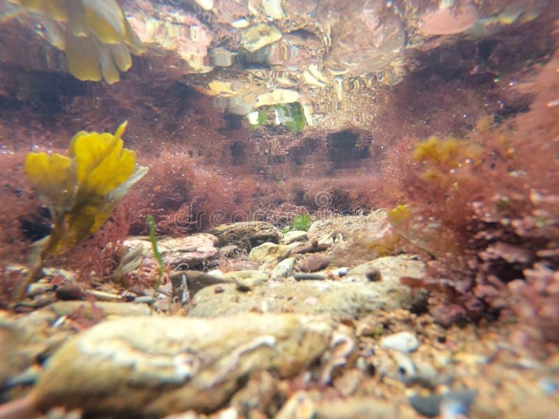 Macro View of Micro Plants kolorowe rośliny w morzu royalty ilustracja
