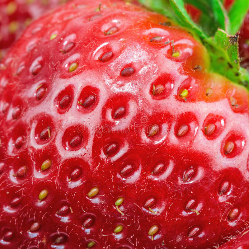 Free Macro View Of Strawberry Stock Photography - 30388962
