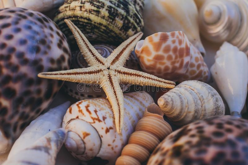Macro view of seashell background. Starfish on seashells background. Many different seashells texture and background. stock photography