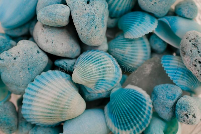 Macro view of seashells. Seashell background. Texture of blue seashells. Seashells texture and background for designers and graphic design. Sea food macro. Sea stock images