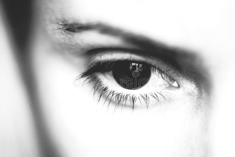 Macro vrouwelijke oog en wenkbrauw, zwart-witte foto stock afbeelding