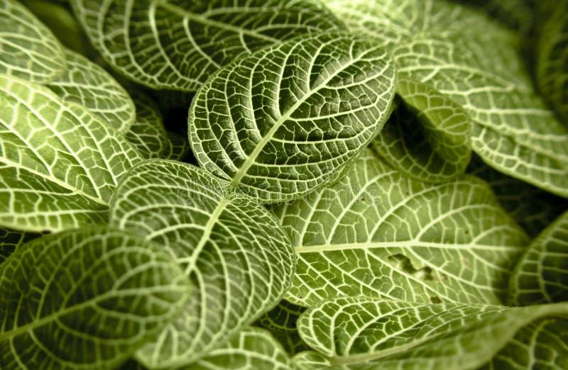 Macro vue de plante tropicale de feuilles photo libre de droits