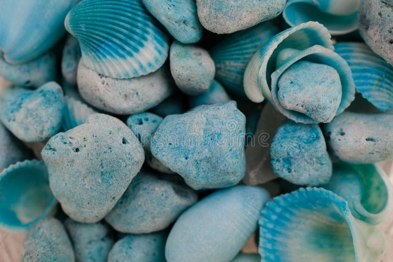 Macro vue des coquillages Fond de Seashell Texture des coquillages bleus photos stock