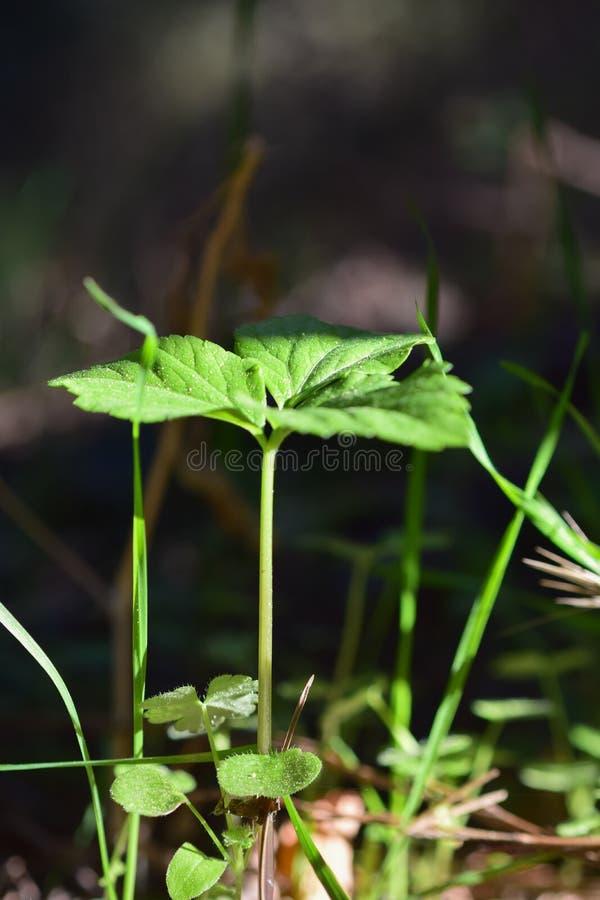 Macro vue des plantes vertes et des herbes de 2018 octobre images libres de droits