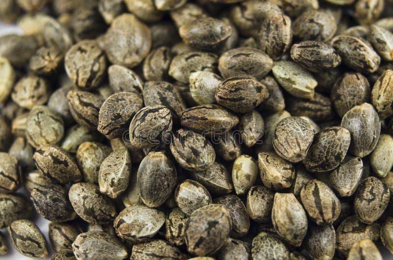 Macro vue en gros plan des graines médicales de marijuana photographie stock