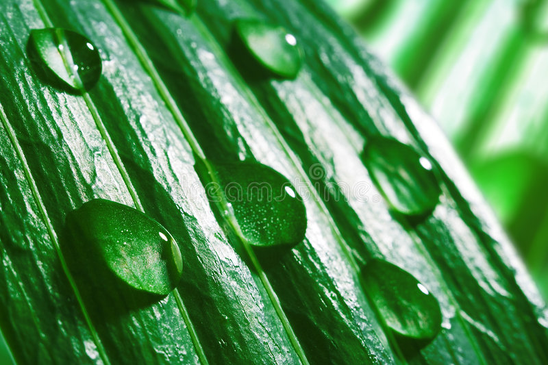 Macro water drops on green leaf royalty free stock photo