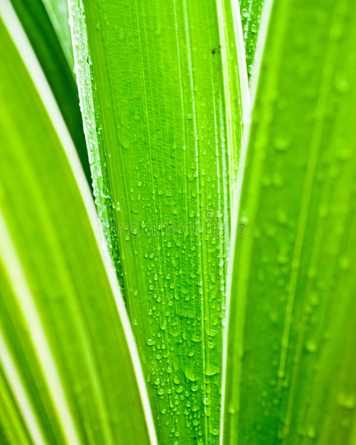 Macro of water drops on green leaf stock images