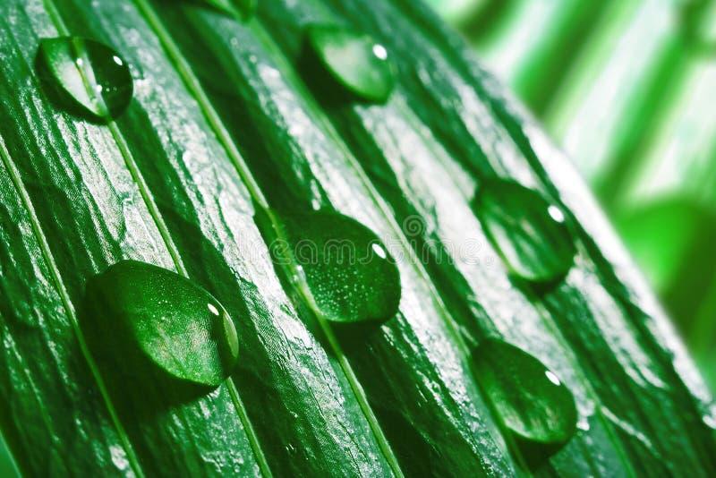 Macro waterdalingen op groen blad royalty-vrije stock foto