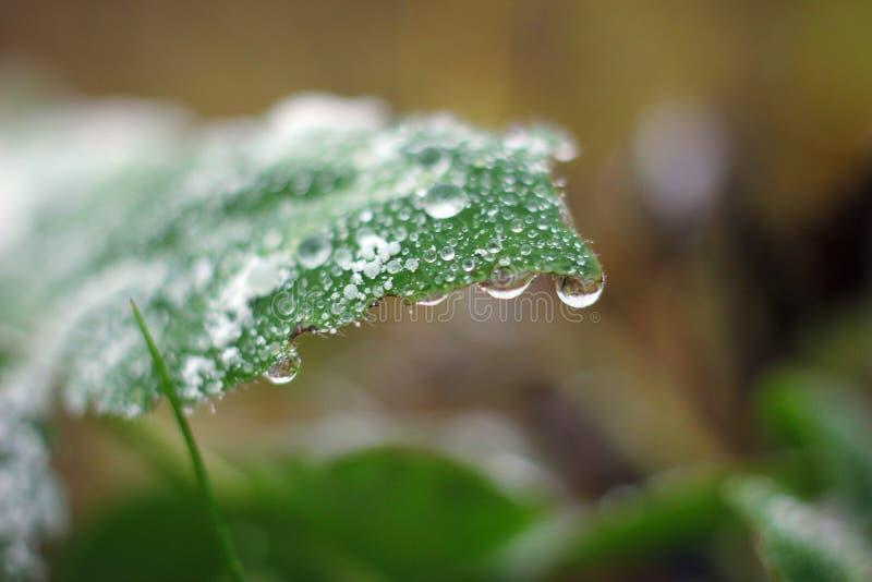 Macro waterdrop royalty-vrije stock afbeelding