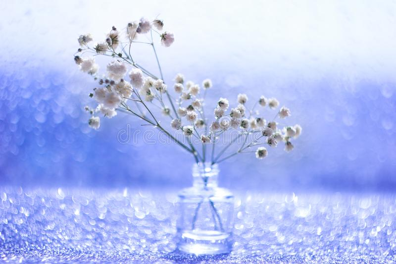 Macro white flowers with blurred bokeh in still life stock photo