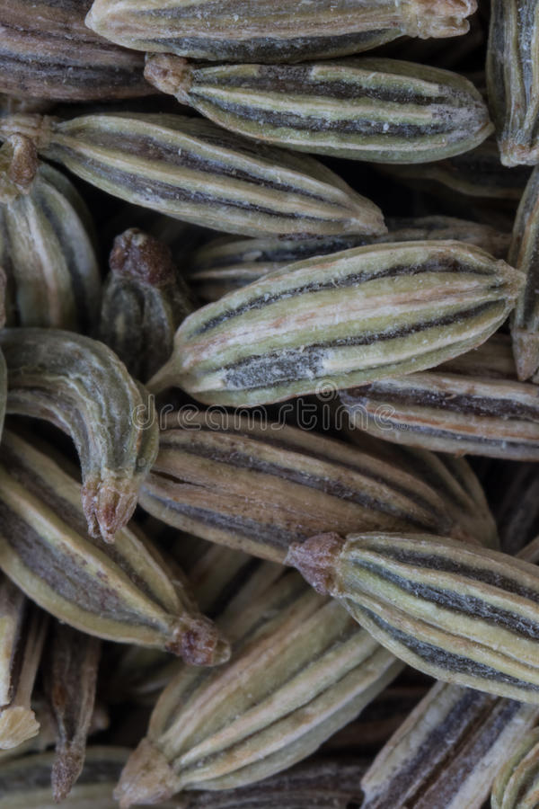 Macro of Whole Fennel Seeds stock photography