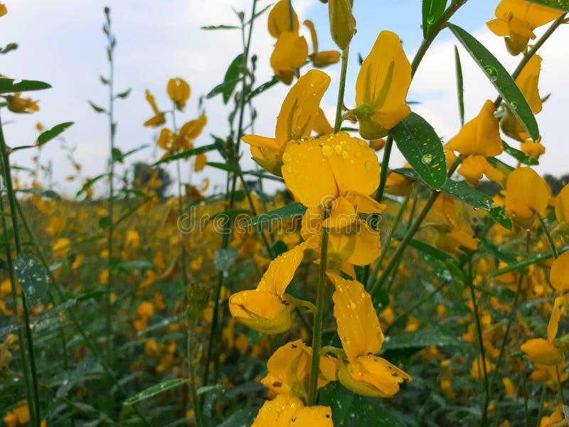 Macro Yellow flower. garden flower& x27;s Beautiful natural Background  wallpaper image stock photos