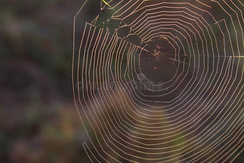 Macroaardfotografie van een Natuurlijk Spinneweb in het Nationale Park van Great Smoky Mountains royalty-vrije stock foto