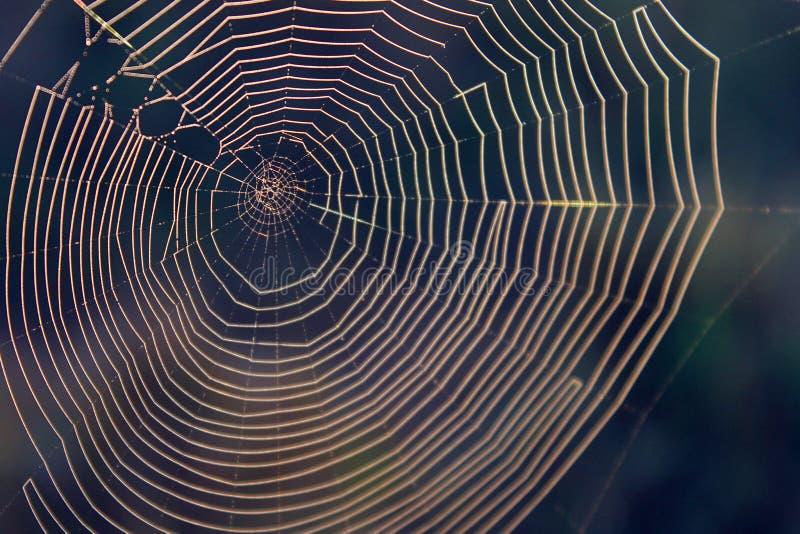 Macroaardfotografie van een Natuurlijk Spinneweb met Vaag Forest Background stock afbeelding