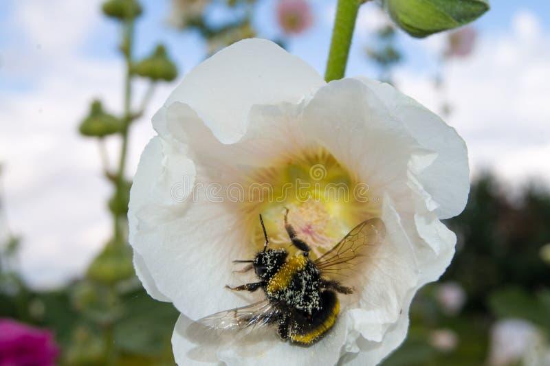 Macrobloemen op een de zomerdag in zonnig weer royalty-vrije stock afbeeldingen