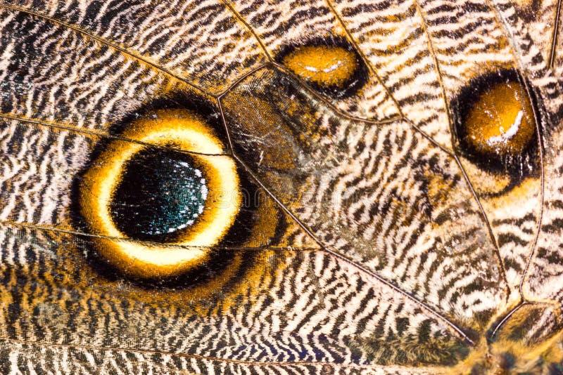 Macroclose-up van bruin de textuur van de vlindervleugel patroon als achtergrond royalty-vrije stock afbeeldingen