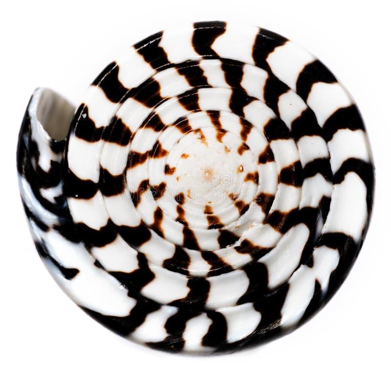 Macrodetail van overzeese shell stock foto