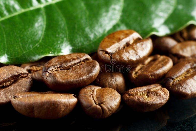 Macrodieclose-up van koffie met groen blad op zwarte wordt geschoten royalty-vrije stock foto's