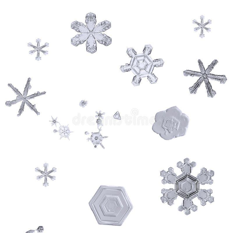 Macrodiereeks sneeuwvlokken op witte close-up wordt geïsoleerd als achtergrond stock foto's