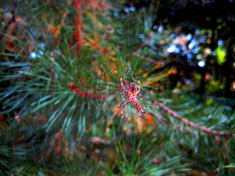Macrofoto met vage achtergrond van bos groen, spin en spinnewebben in de glans van zonlicht stock afbeelding