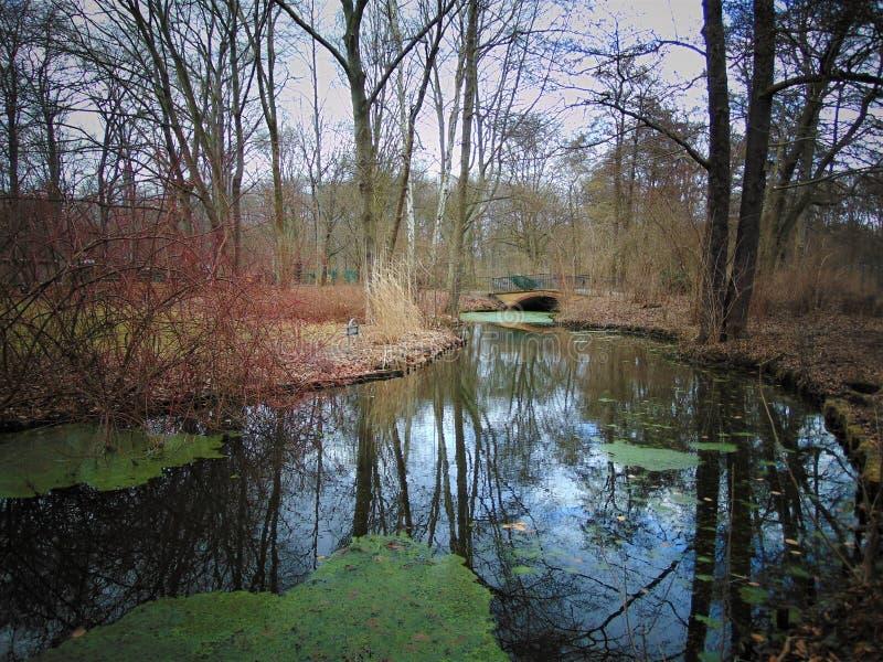 Macrofoto's met landschapsachtergrond van de eerste dag van de lentemaart in een Park royalty-vrije stock afbeeldingen
