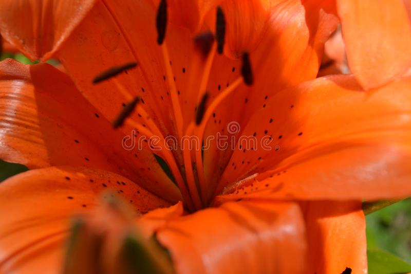 Macrofoto van Bright Orange Flower royalty-vrije stock foto's