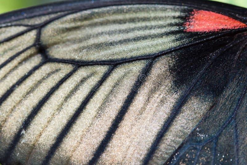 Macrofoto van de kant van de de vleugelbodem van de morphovlinder royalty-vrije stock afbeelding