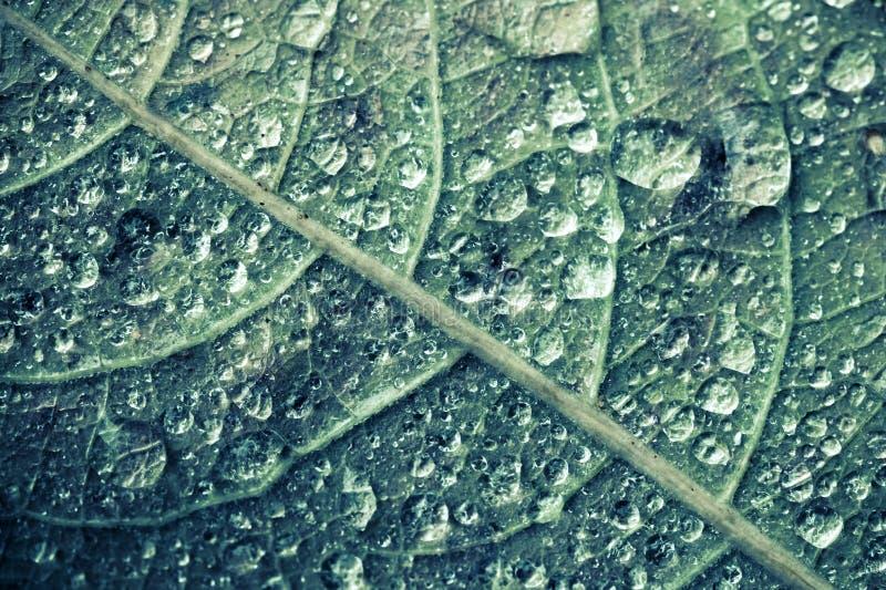 Macrofoto van groen boomblad met waterdalingen stock foto's