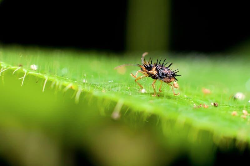 Macrofotografie die een insect van het hoornlichaam tonen royalty-vrije stock afbeelding