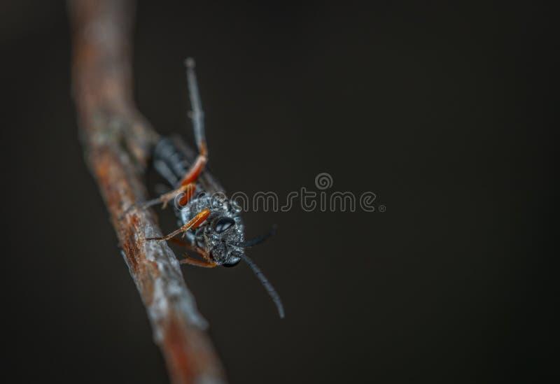 Macrofotografie van Black Insect op Brown Twig royalty-vrije stock foto