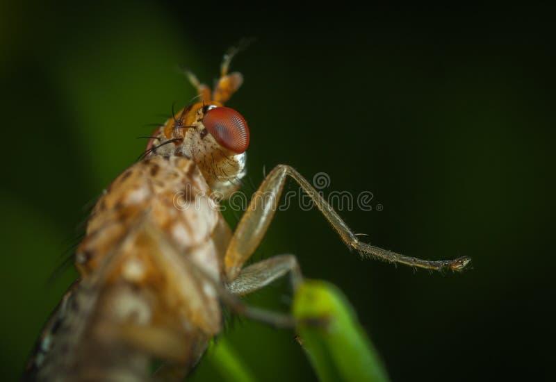 Macrofotografie van Brown Insect royalty-vrije stock afbeelding