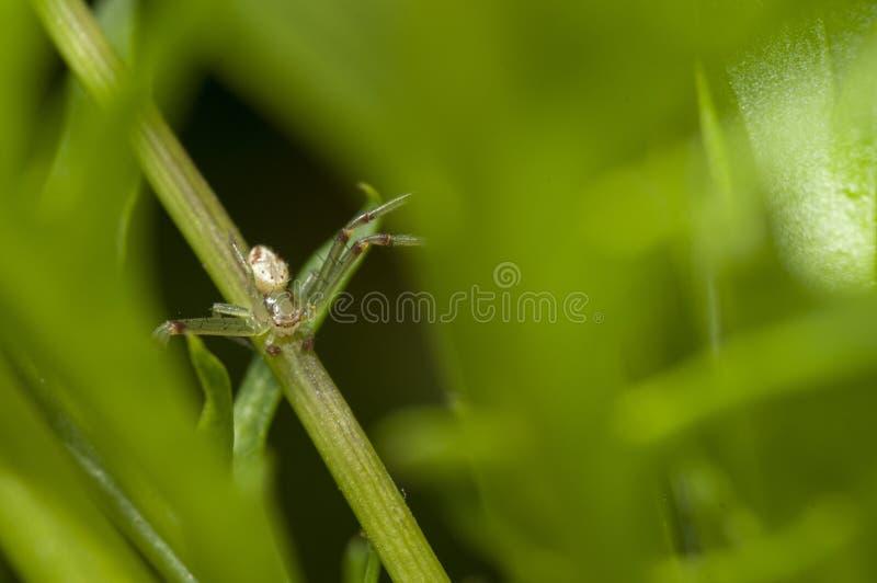 Macrofotografie van een klein insect dat op een groene tak op een wazige achtergrond zit royalty-vrije stock afbeeldingen