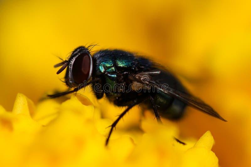 MACROfotografie van Insectvlieg stock afbeelding