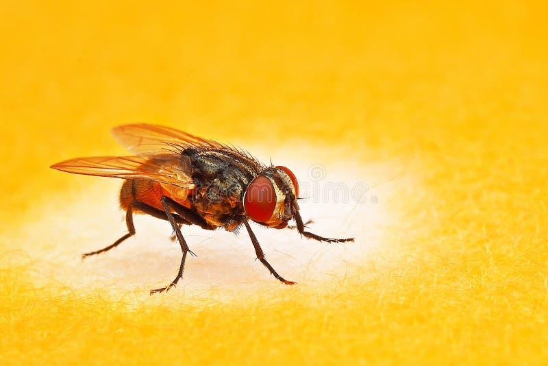 Macrofotografie van vlieg op witte punt oranje kleren als achtergrond stock foto