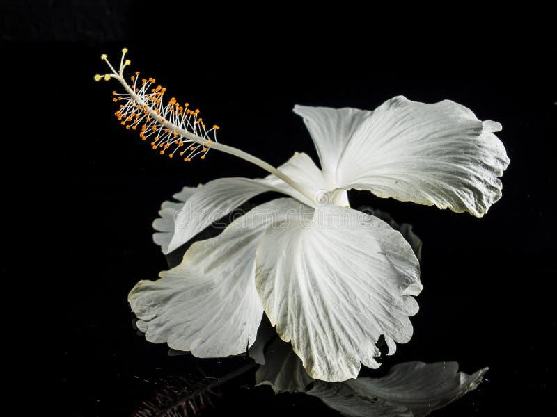 Macrofotografie van witte bloem royalty-vrije stock afbeeldingen