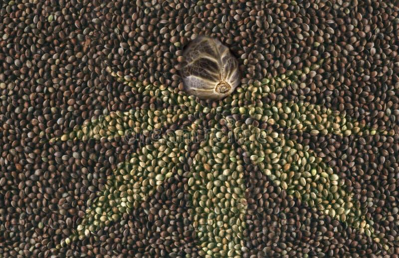 Macrohennepzaad op de achtergrond van vele hennepzaden royalty-vrije stock afbeelding
