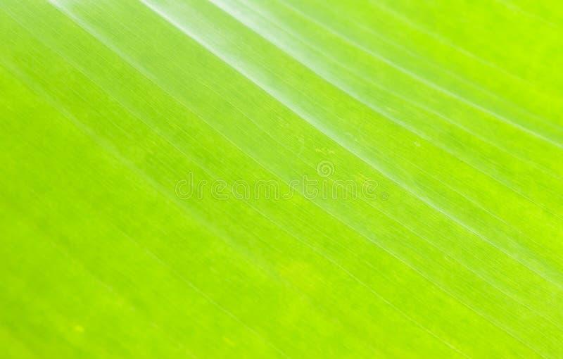 Macropatroon van groen blad stock foto