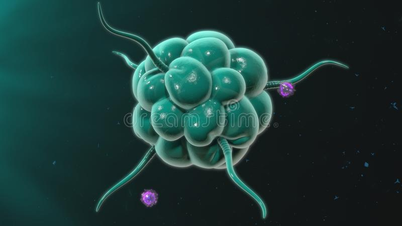 macrophage vektor illustrationer