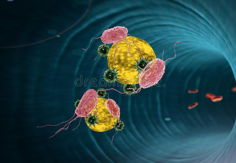 Macrophage and fat cells inside the blood vessel vector illustration