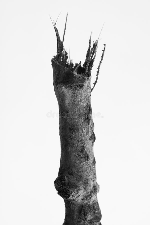Macrophoto av växtobjekt med höga detaljer royaltyfria bilder